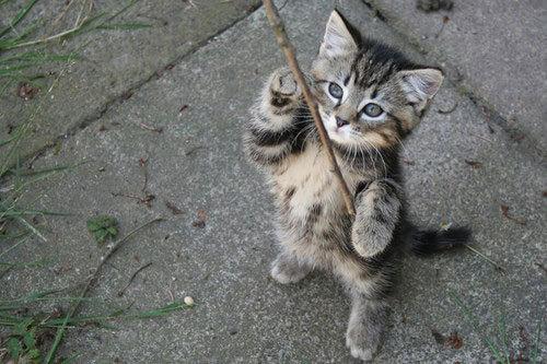 Классные котята (21 Фото)