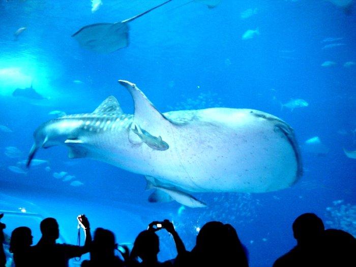 связи этим океанариум в москве самый большой цена со скидкой вид