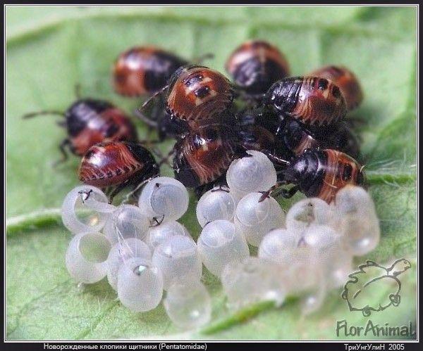 Макро-фотографии насекомых (30 Фото)