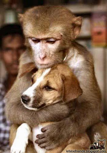http://trinixy.ru/pics/animal_friends_27.jpg