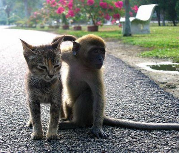 http://trinixy.ru/pics/animal_friends_28.jpg