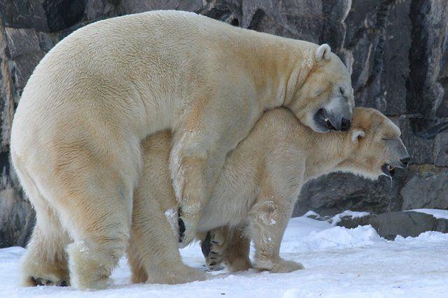 Смотреть прикольные картинки с животными, лучшие смешные картинки