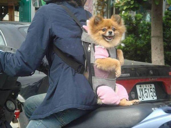 Перевозка собак (6 фотографий)