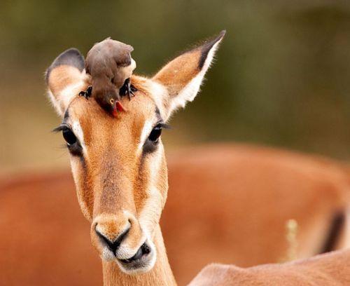 Забавные животные (50 фотографий)