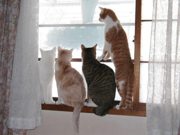 http://trinixy.ru/pics/funny_cats_06.jpg