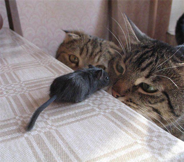 http://trinixy.ru/pics/funny_cats_19.jpg
