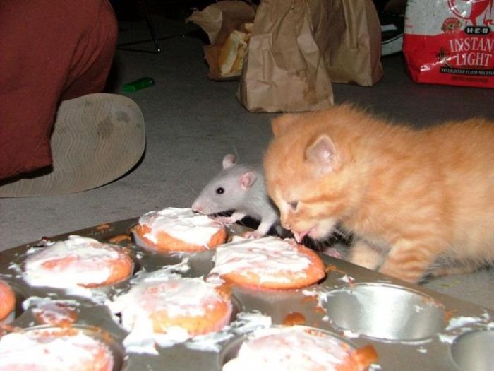 http://trinixy.ru/pics/funny_cats_22.jpg