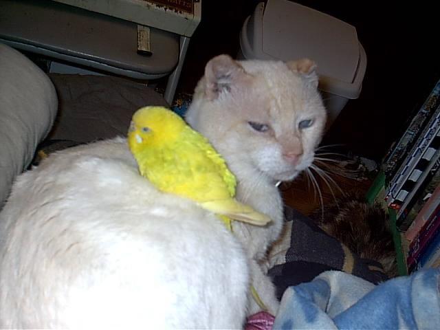 http://trinixy.ru/pics/funny_cats_62.jpg