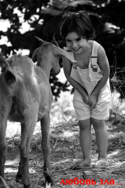 Забавные животные (57 фотографий)