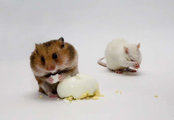 Мышки и кошки