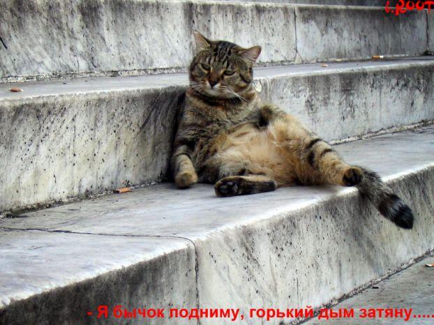 И еще немного котиков))))