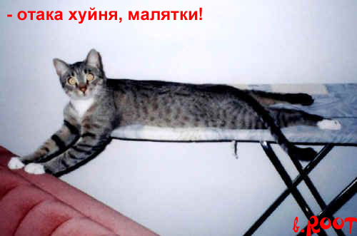 Боянная мега-подборка котов (49 фото)