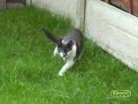 Как атакуют коты... (1 мб)