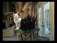Синхронный танец котов )) (2,9 мб)