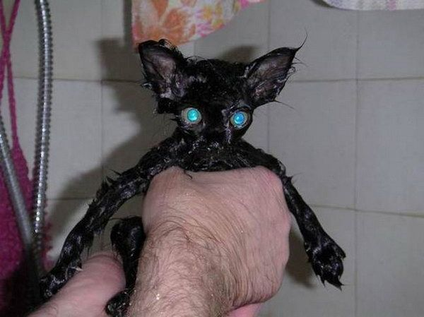 Бедные коты )) (26 фотографий)