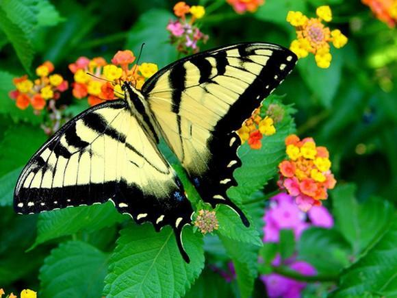 красивые бабочки фото
