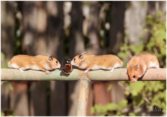Супер-подборка животных (86 фото)