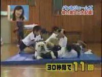 Японские шоу с участием животных (10 видео)
