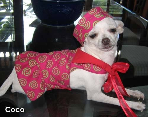Мегаподборка.  Собачья мода или эти смешные животные (188 фото)