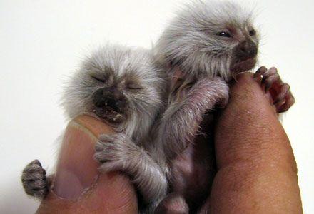Животные, которые умещаются на пальце (104 фото)