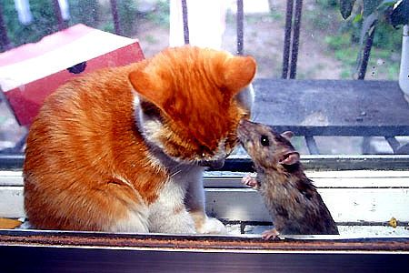 Том и Джерри. Вот такая бывает дружба (7 фото)