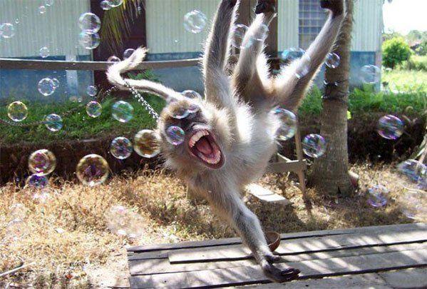 Эти забавные зверюшки не перестают радовать. Позитив :) (55 фото)