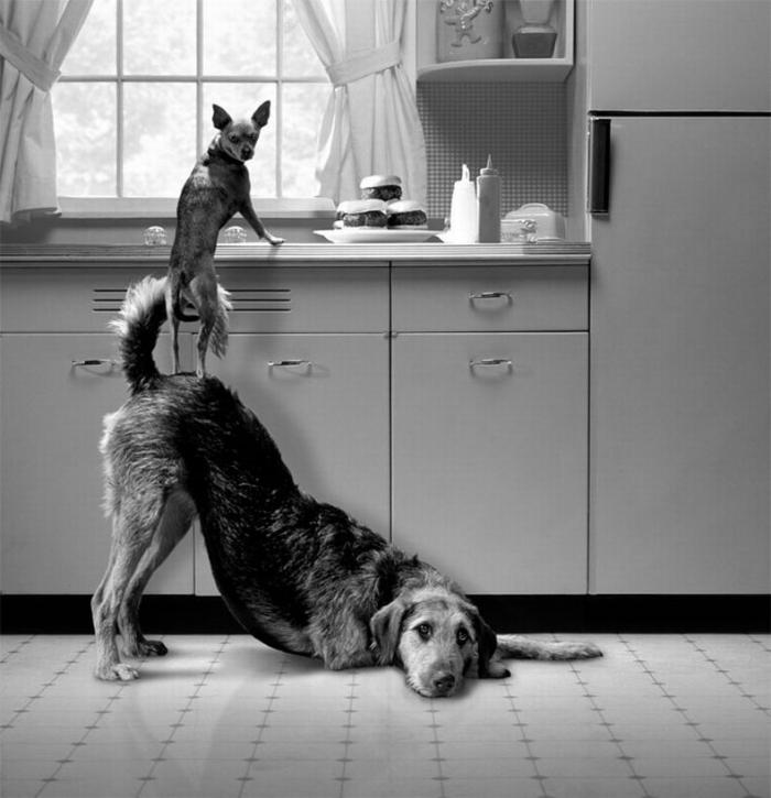 Нетривиальные работы фотографа Hovard Berman (10 фото)
