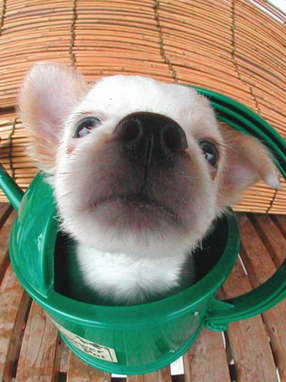 Немного позитива ) Классные фотографии щенков и котят (73 фото)