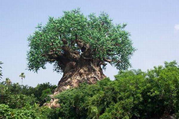 Резьба по дереву (15 Фото)