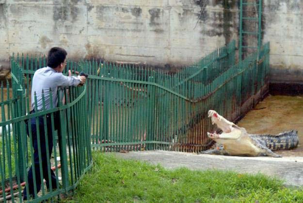 История крокодила. Фото не для слабонервных (3 фото)