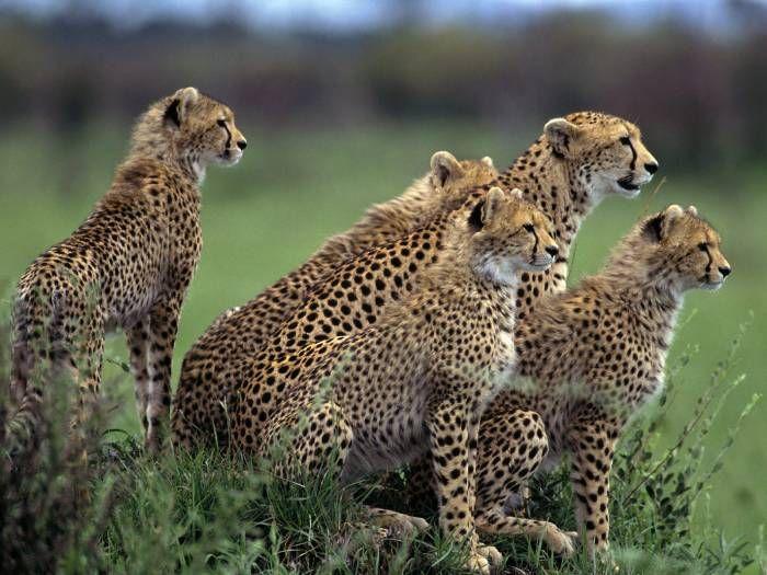 Подборка лучших фотографий SPRING'2007: животные, спорт, креатив (247 фото)