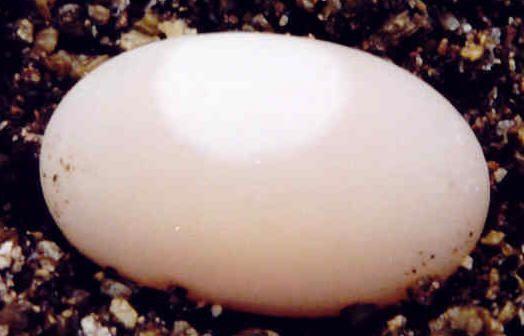 И что вылупится из такого яйца? (4 фото)