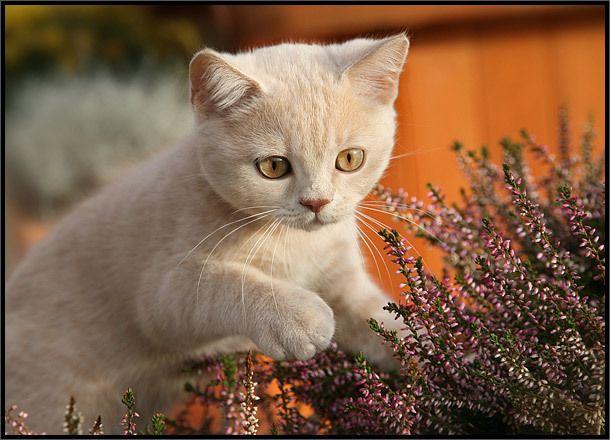 Коты и котята. Позитивчик! (38 фото)