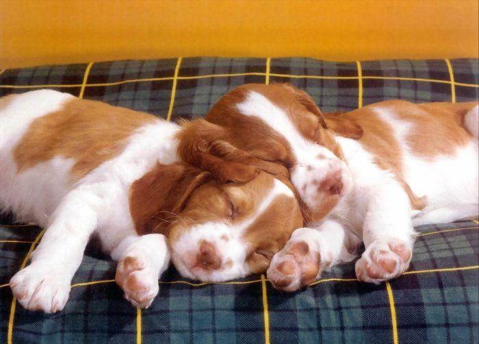 Микс - 100 забавных собак и кошек (2 страницы по 50 фото)