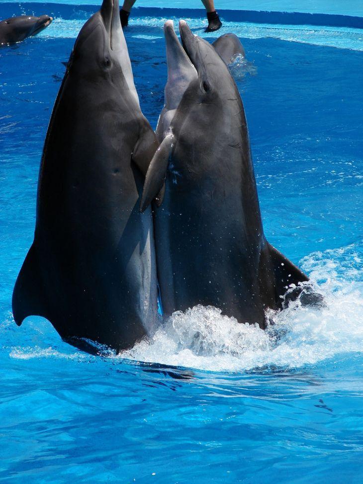 Картинки касатка и дельфин