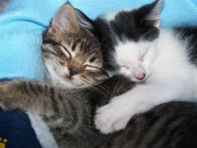 Кошки просто прелесть! Суперпозитив (57 фото)