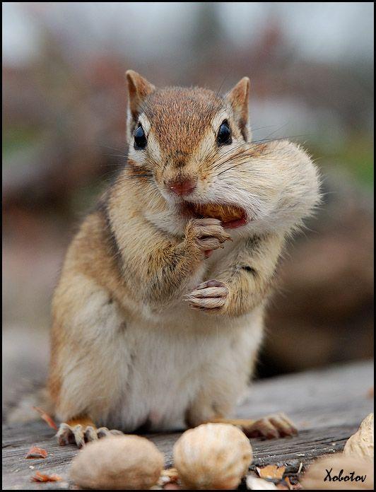 Инструкция по поеданию орехов (5 фотографий)