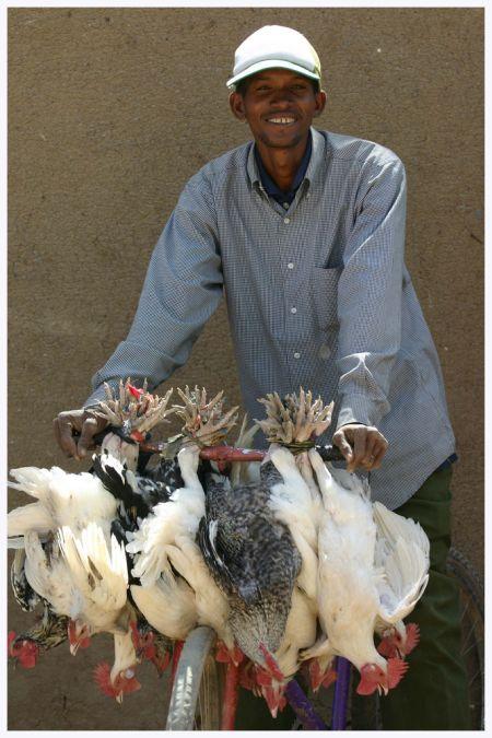 Методы перевозки куриц (22 фото)
