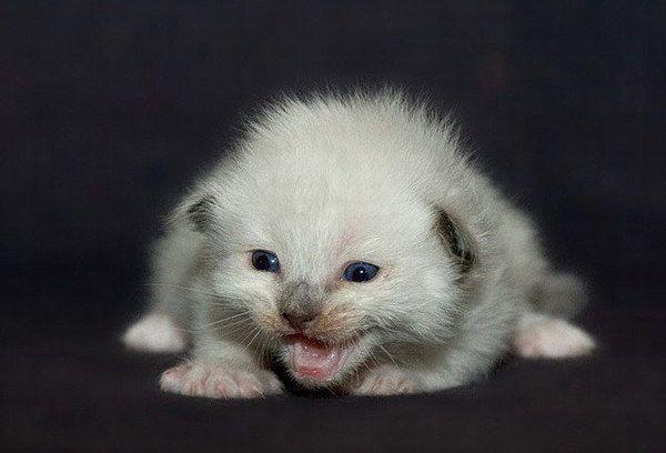 Забавные котята. Очень мило (28 фото)