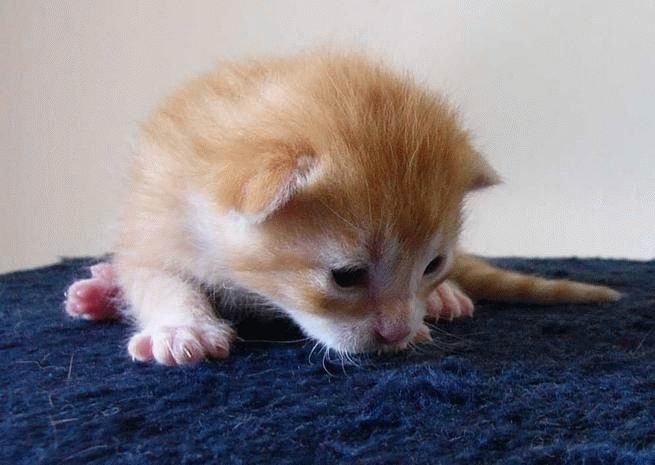 Прикольные кошки. Позитивно ) (75 фото)
