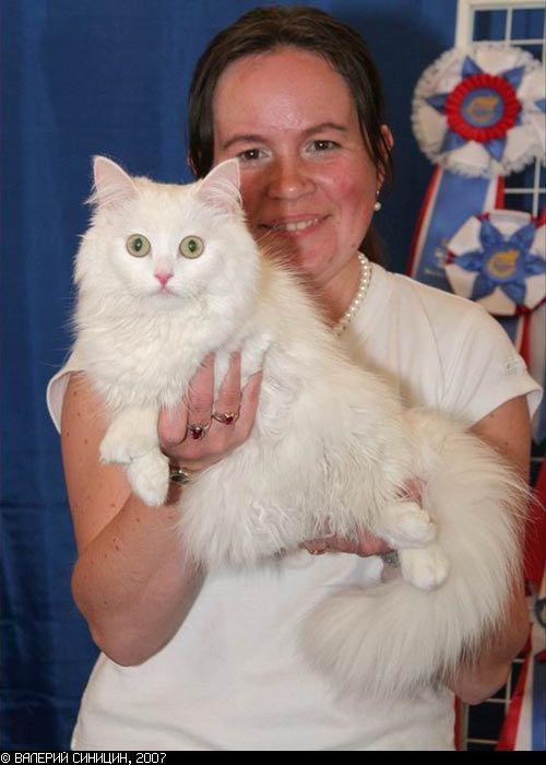 Любителям кошек понравится ))) (27 фото)