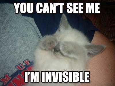 Коты американских форумов - самая полная подборка (241 фото, разбито на 2 страницы)