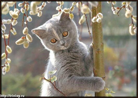 Мега-фотографии котов ) Настоятельно рекомендую (70 фото)