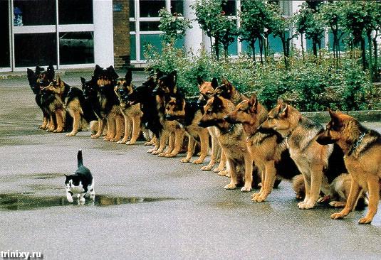 Смешные собаки (53 фото)