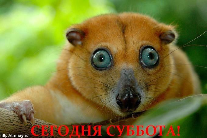 subbot_02.jpg