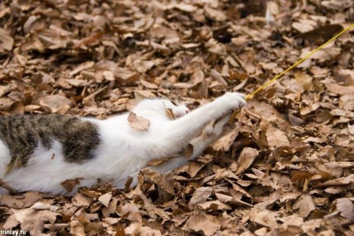 Классная подборка смешных котов (60 фото)