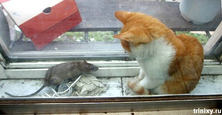 Позитив дня. Дружба животных (122 фото)