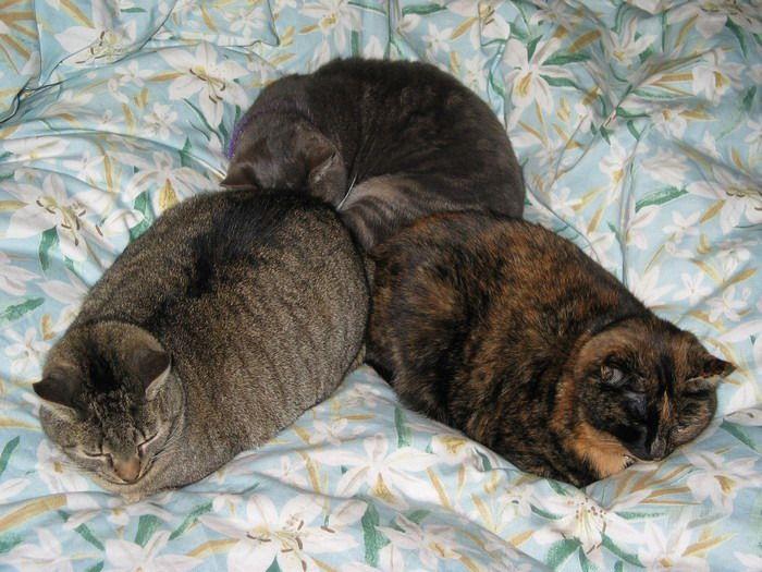 Подборка спящих кошек. Очень мило ) (46 фото)