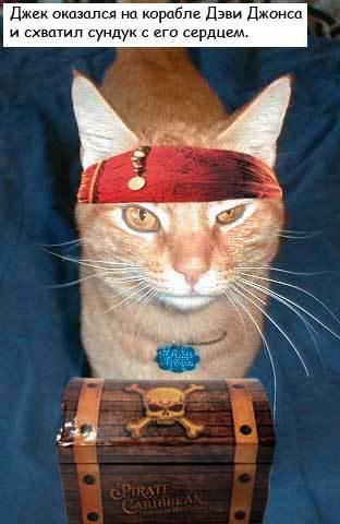 Коты-пираты Карибского моря (25 фото)