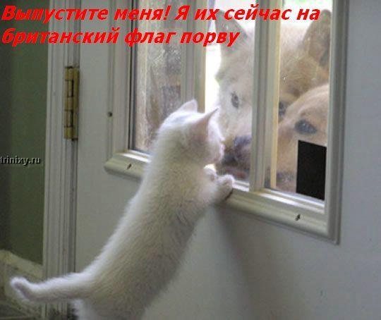 О чем думают коты. Для чайников. Мегапозитив (41 фото)